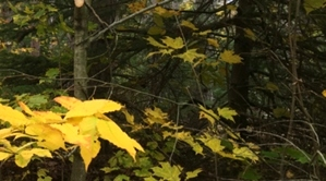Algoma Wiisconsin In Fall